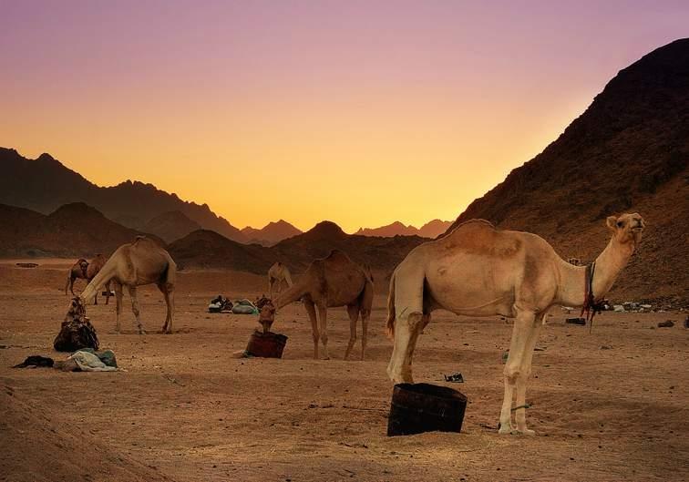 Safari em quadriciclo ao pôr do sol