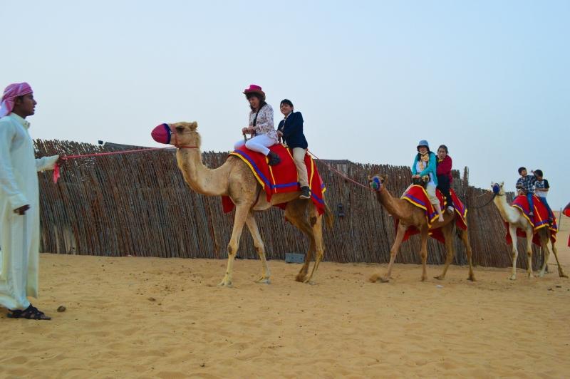 Giro in Cammello a Dubai