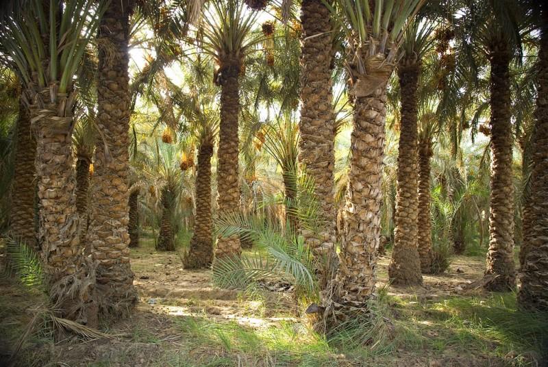 Oasis de Bahariya