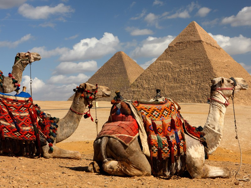 ギザ三大ピラミッドの回りにいるらくだ