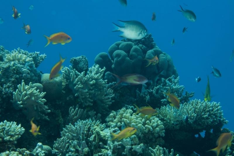 Snorkeling au Port Ghalib Marsa Alam - Egypte