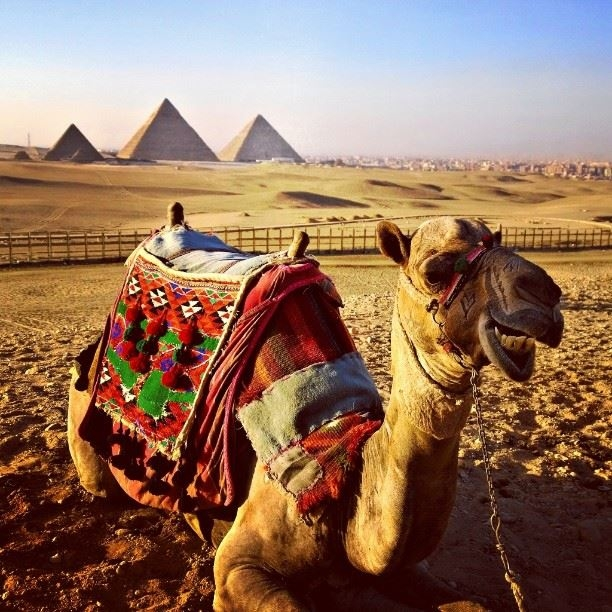 Camel Ride round the Pyramids