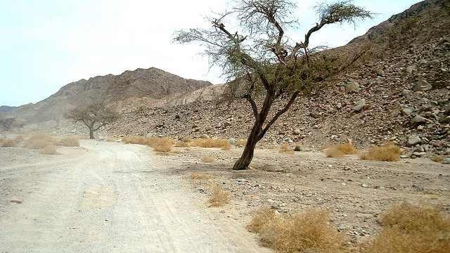 Une route dans le Sinaï