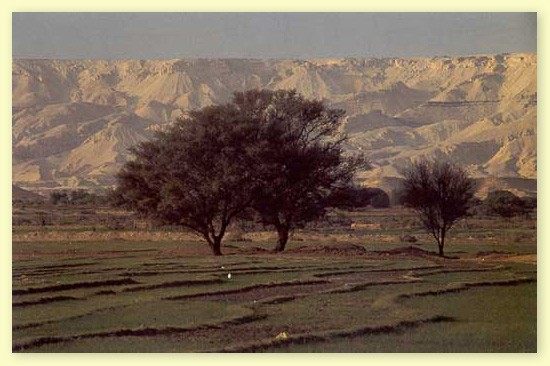 El Oasis de Bahariya