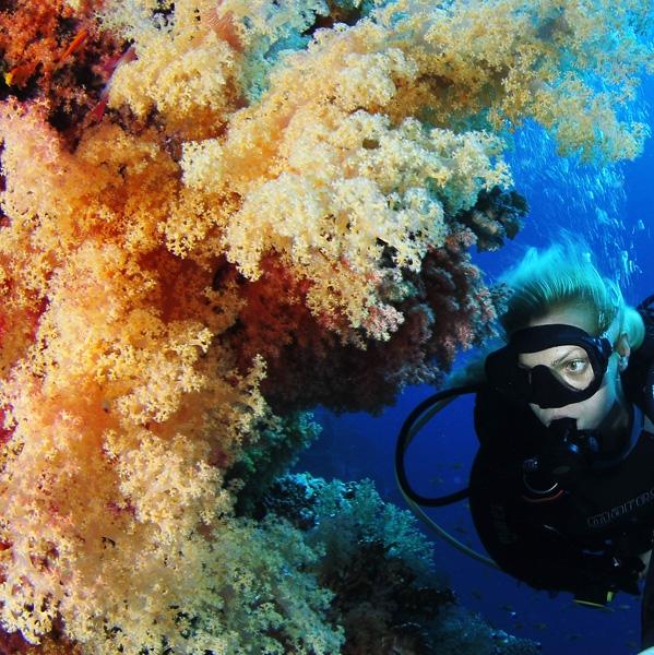 Mar Rojo, Sharm el Sheikh