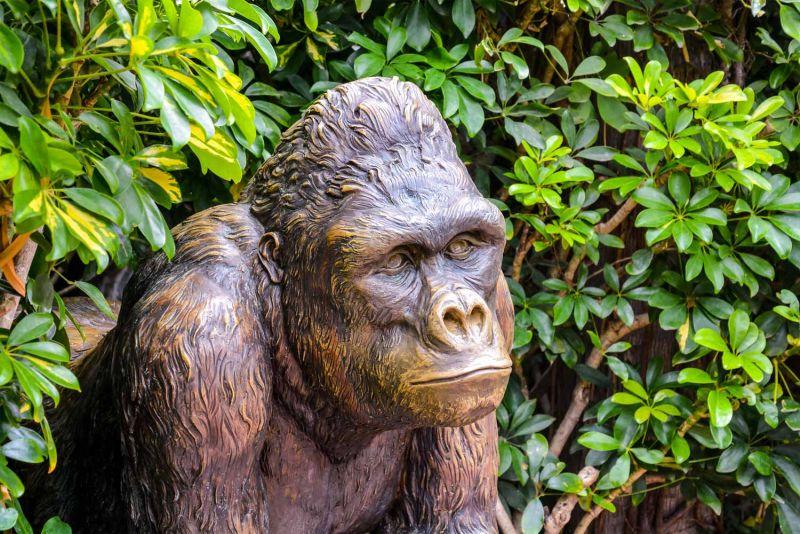 Gorilla Statue Information