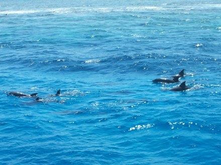 Schwimmen mit Delphinen