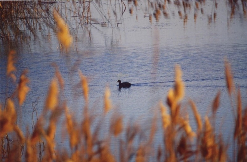 EL Fayoum Lake