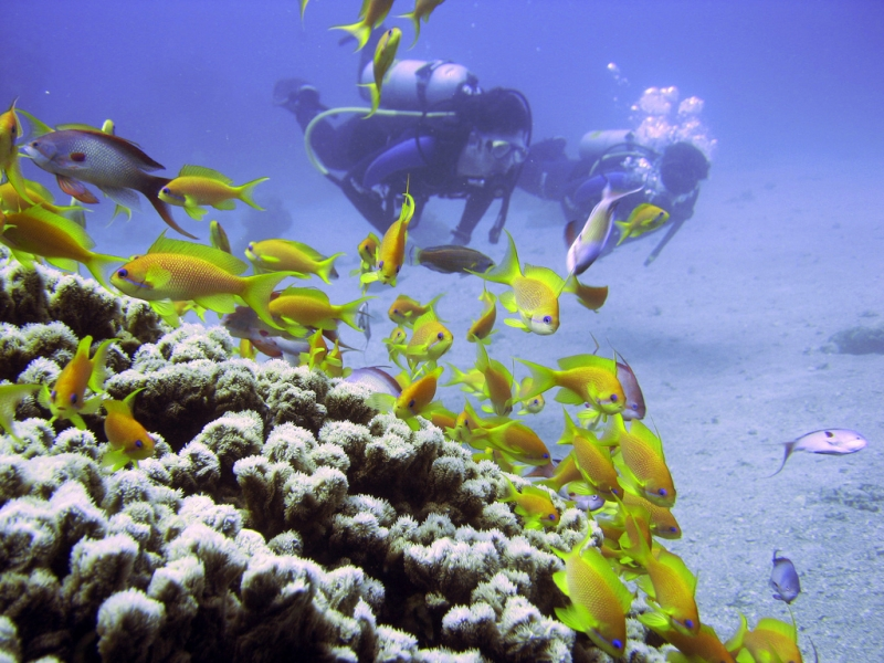 Diving in the Red Sea, Egypt