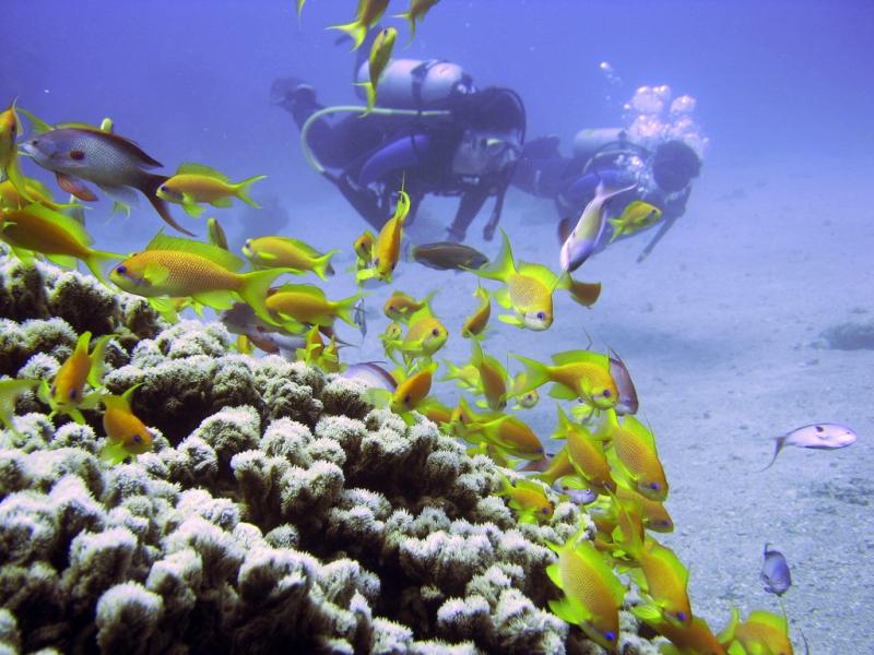Esnórquel na Ilha de Mahmeya