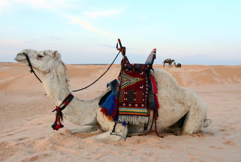 Safari ad Abu Dhabi