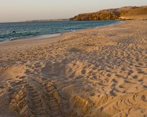 Ras Al Hadd Beach of Oman