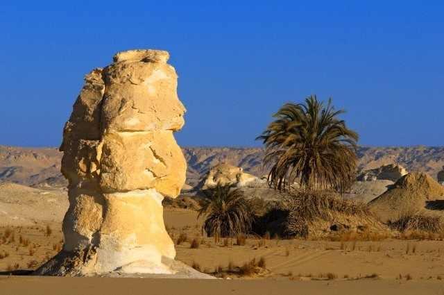 Oasis de Farafra