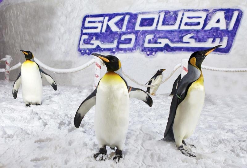I Pinguini a Ski Dubai