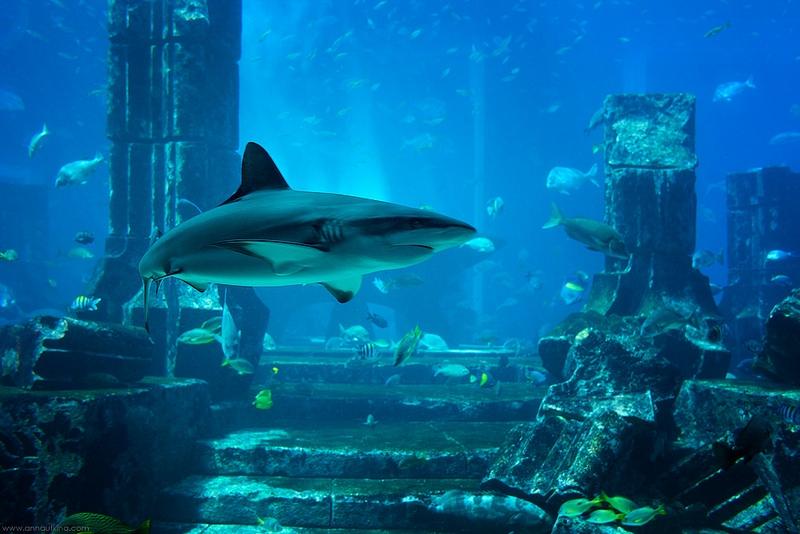 Lost Chambers Aquarium in Atlantis The Palm
