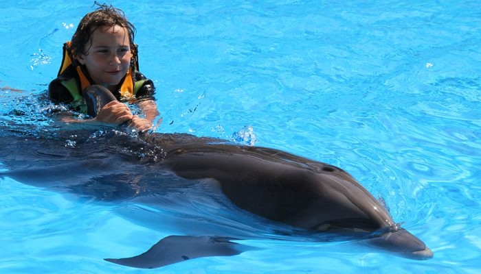 Dolphin Show in Hurghada, Red Sea