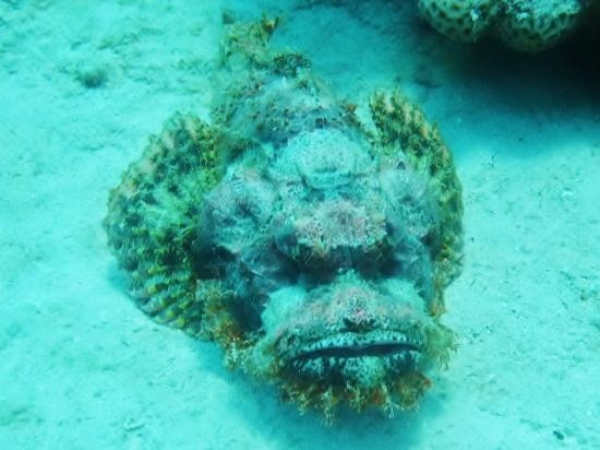 Underwater Life, Red Sea