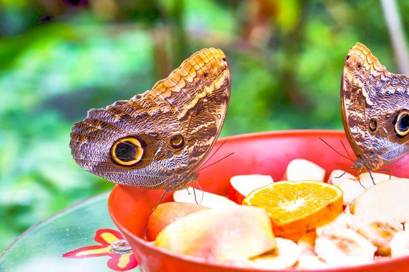 Dubai Miracle Garden and Butterfly Garden