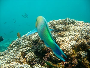 Al-Dimaniyat Islands Nature Reserve
