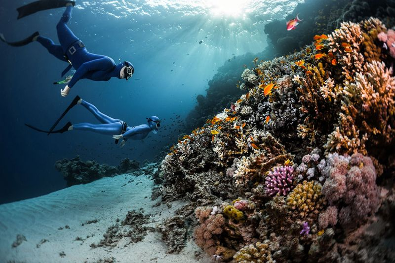 The Fascinating Red Sea in Egypt