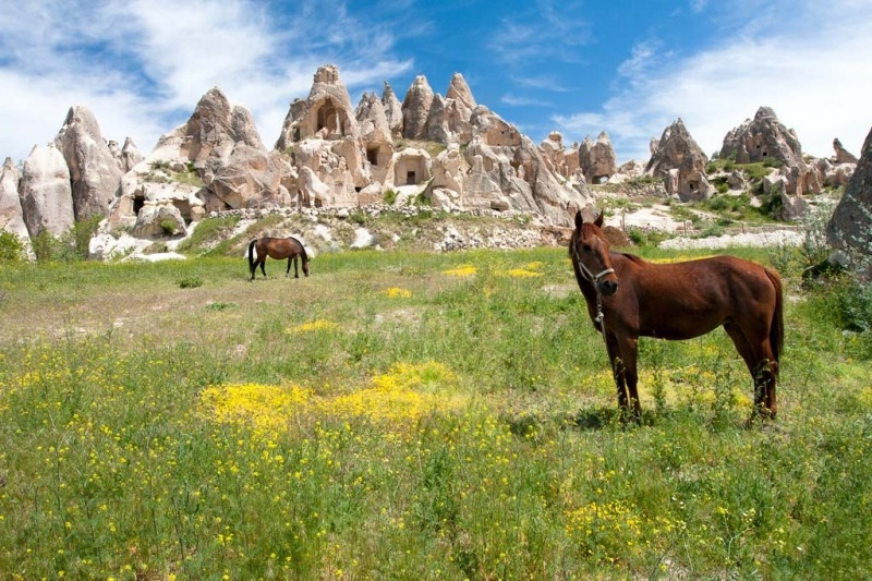 Cappadocia Turkey Horse Riding