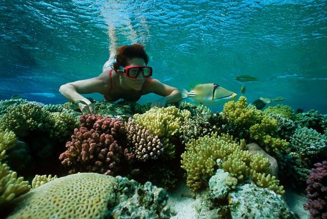 Snorkeling all'isola di Giftun