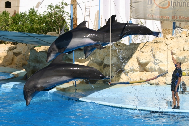 Шоу Дельфинов в Шарм эль-Шейх