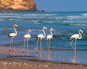 Dhofar Lagoons