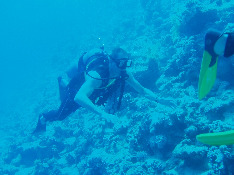Scuba Diving Experience in Red Sea