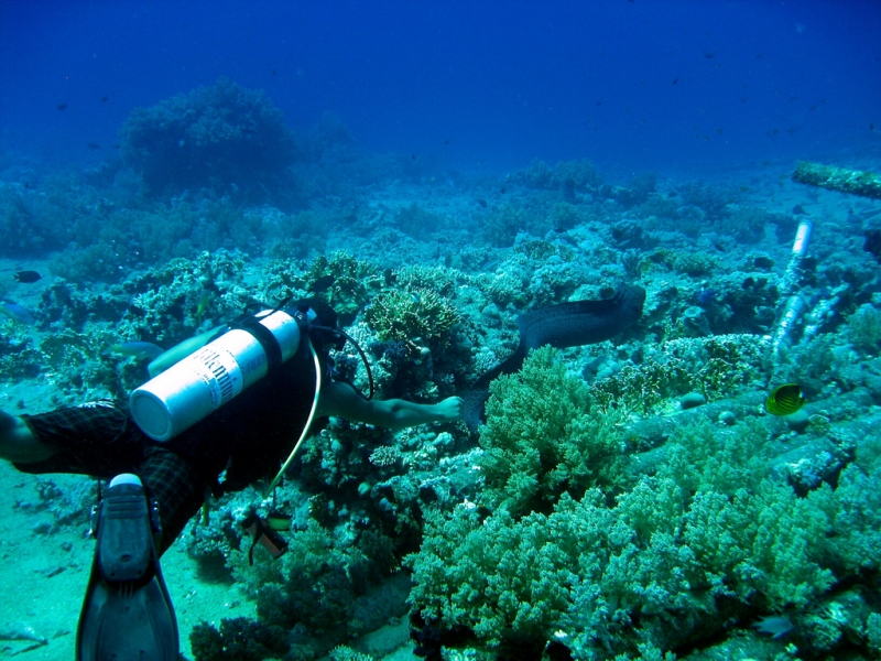 Diving at Ras Mohamed National Park