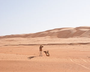 A'Sharqiyah Sands of Oman