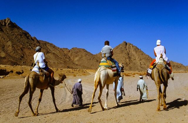 Paseo por el camello