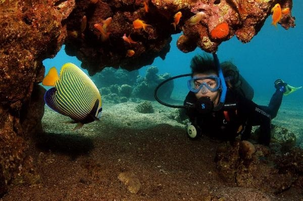 红海和赫尔各达潜水旅行