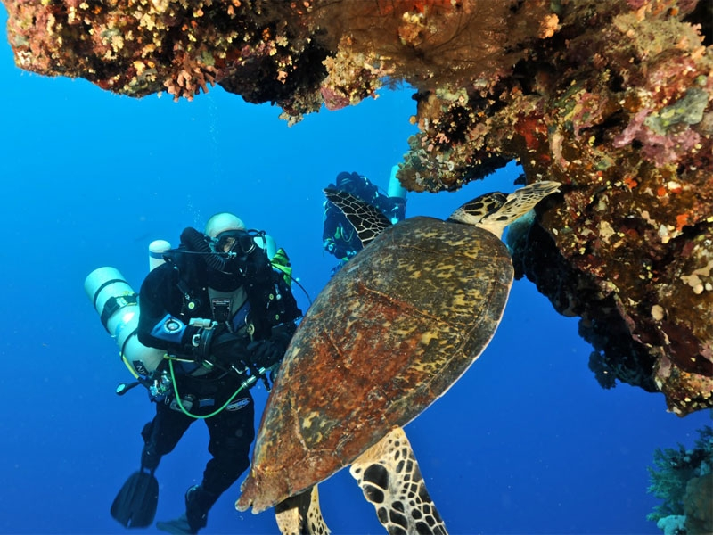 Diving Experience in Hurghada, Red Sea