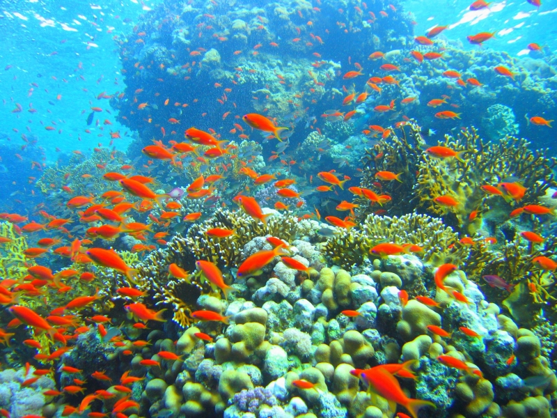 Marine Life in Red Sea