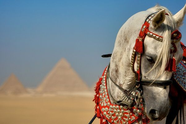 Tour by Horse around the Giza Pyramids
