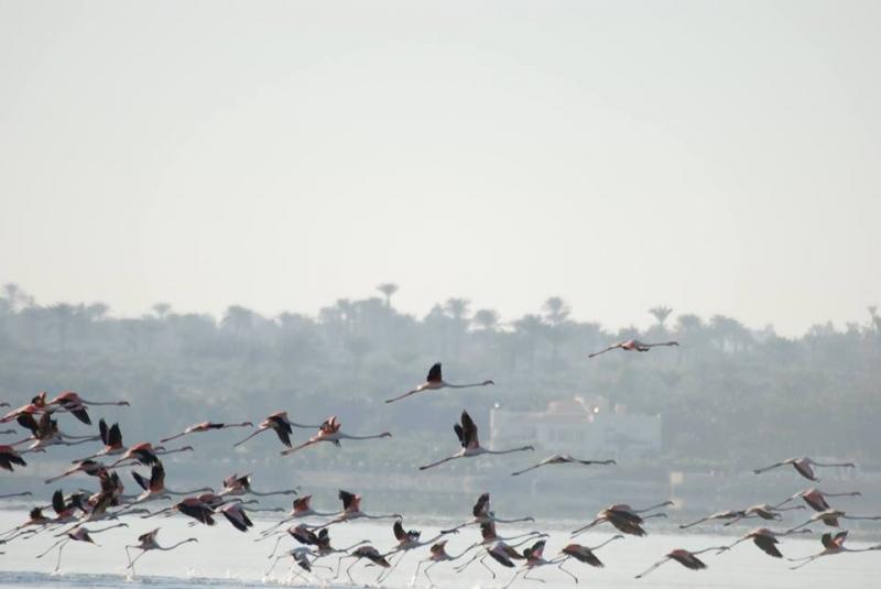 Fayoum Bird-watching Guide