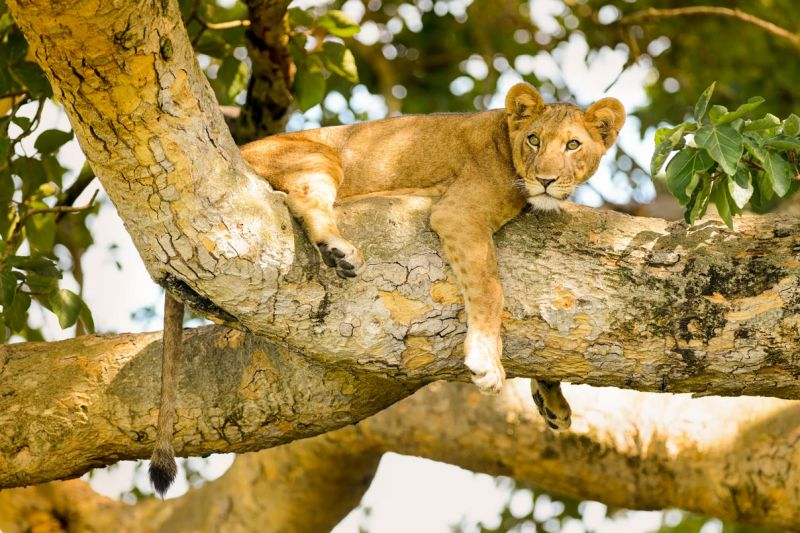 Queen Elizabeth National Park Guide
