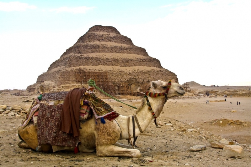 Camel Ride around Saqqara pyramid