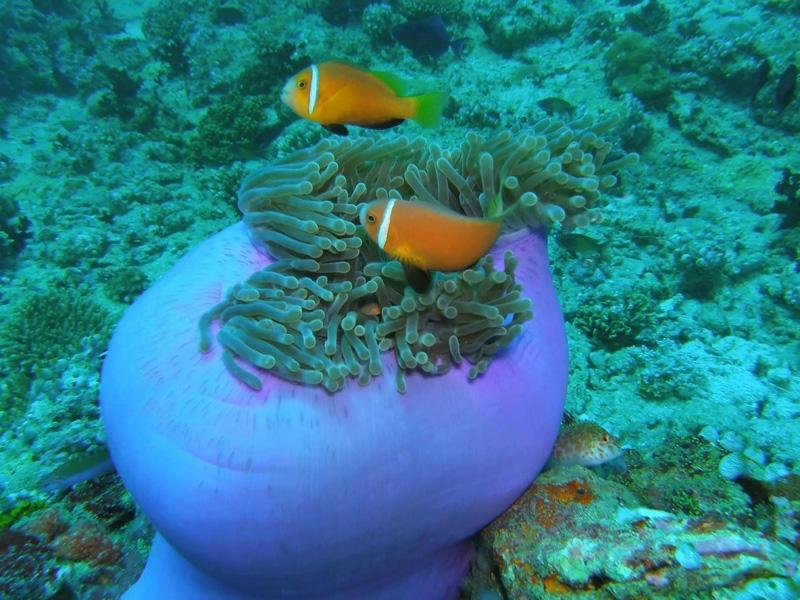 Marine Life in Sharm