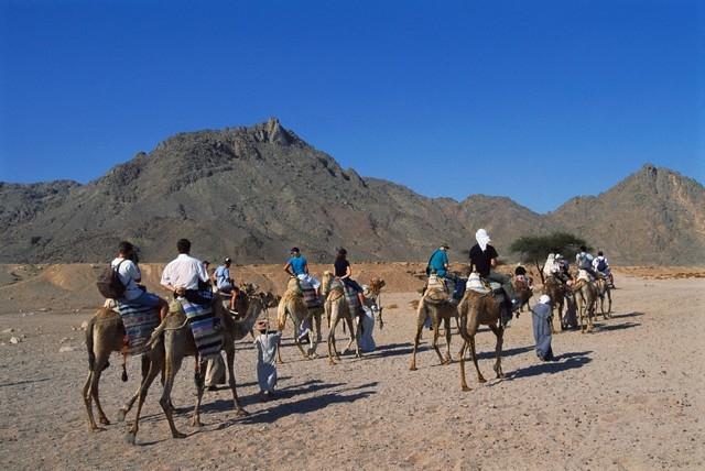 Cammellata Nel Deserto