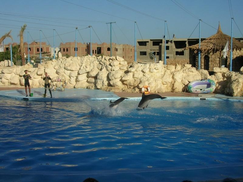 Dubai rencontre dauphin