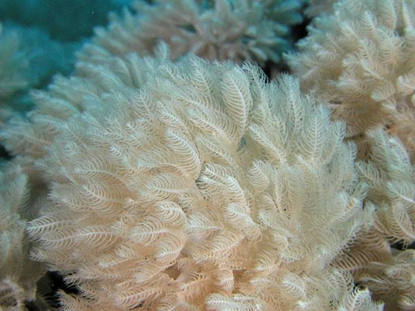 Soft Corals, Marsa Alam
