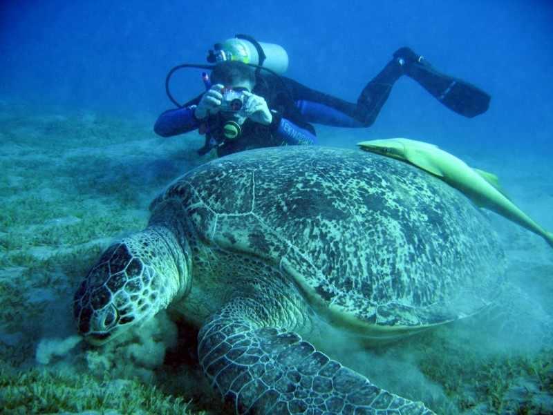 Une riche faune sauvage à Hurghada