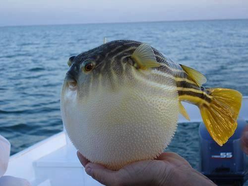 Pêche sur le lac nasser en petit bateau