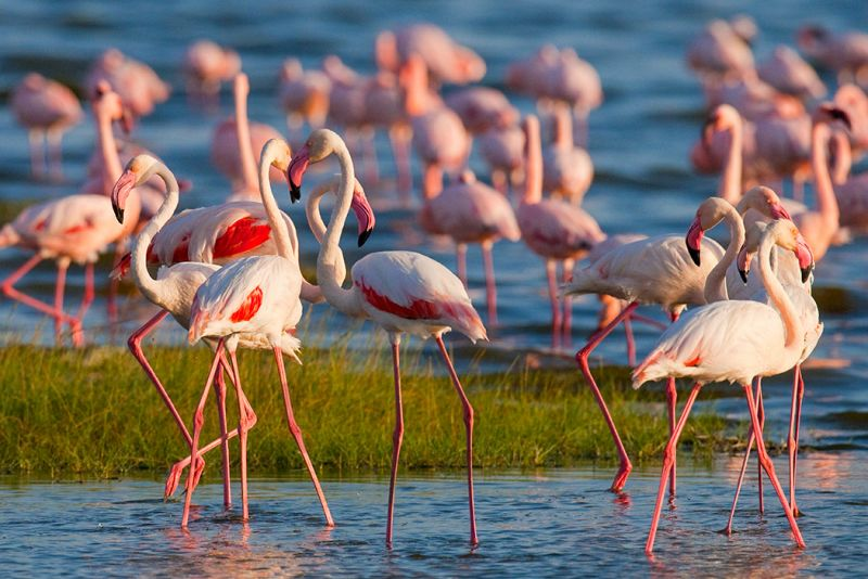 Lake Nakuru Guide