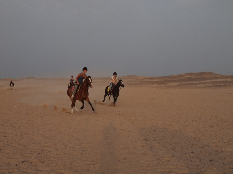 Horse ride in Sinai