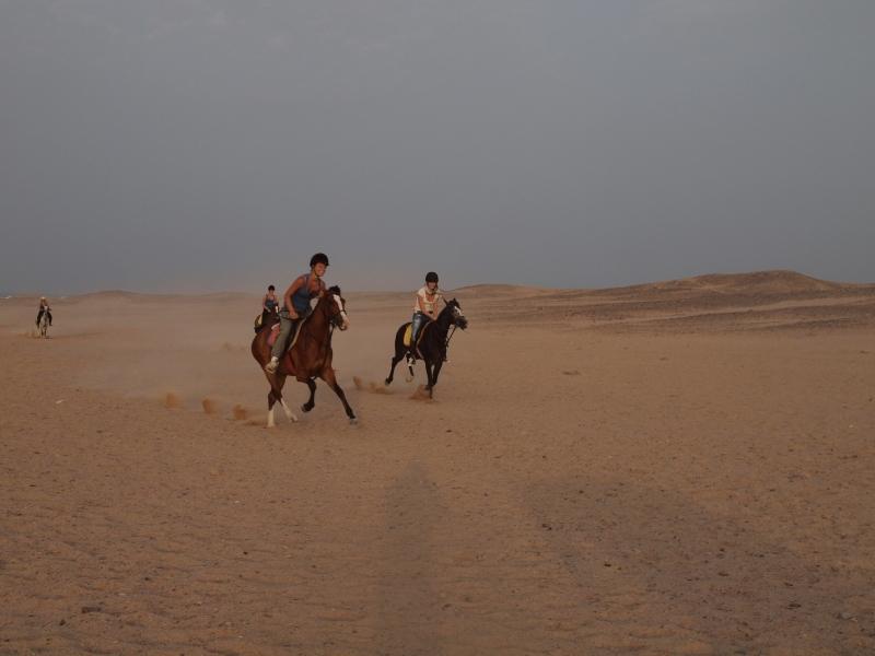 Horse ride in Sinai