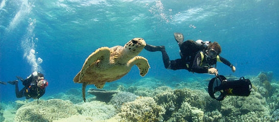 Diving in The Red Sea - Hurghada