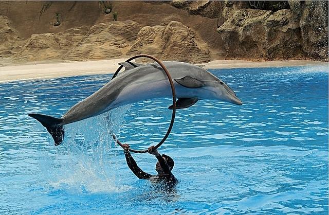 Sharm El-Sheikh Dolphin Show